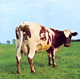 + info. de 'Atom Heart Mother', Pink Floyd (1970)
